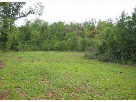 Gorgeous Land Ready To Build On : Silk Hope : Chatham County : North Carolina