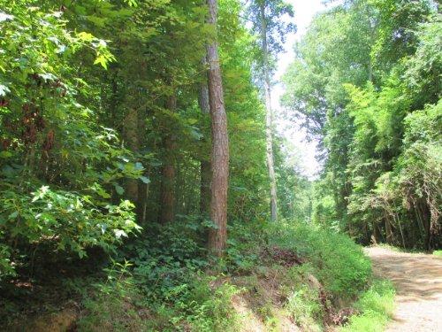 14.18 +/- Wooded Acres, Ranger : Ranger : Gordon County : Georgia