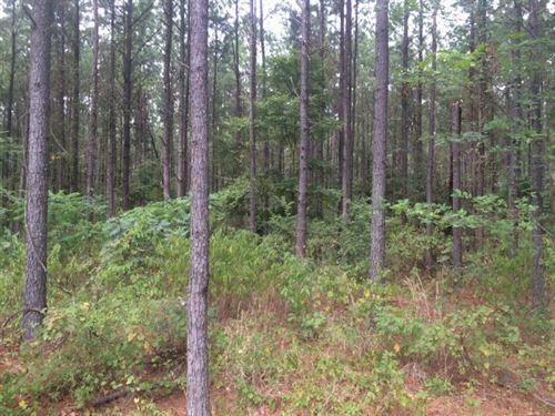 Timberland, Hunting Land For Sale, : Sand Hill : Rankin County : Mississippi
