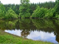 Reduced 8 Acres With A Pond