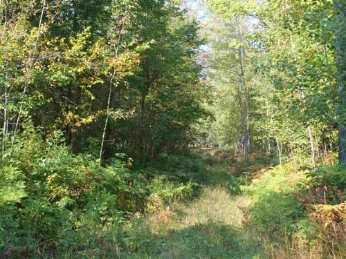 Tbd Jug Rd., Baraga, Mls# 1090689 : Baraga : Michigan