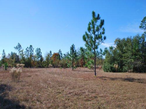 Perfect Genteman Farm, High & Dry : Screven : Wayne County : Georgia