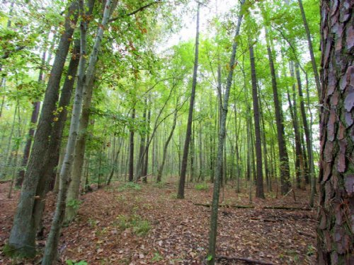 26.08 Wooded Acres : West Point : King William County : Virginia