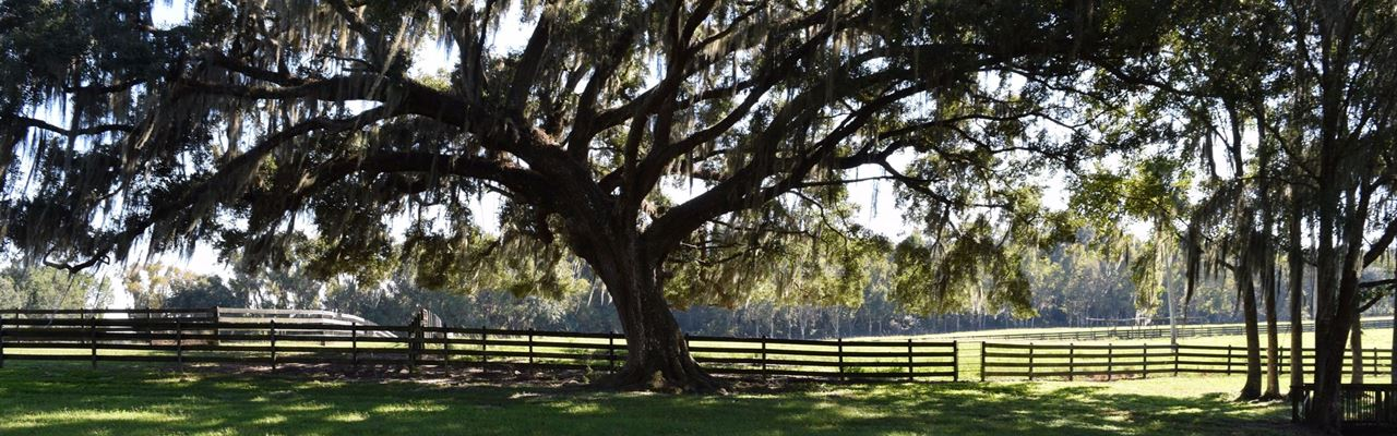 Beautiful 254 Acre Ranch