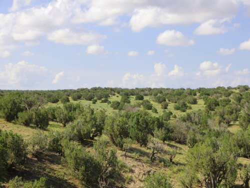 38 Acre Northern Arizona Ranch : Springerville : Apache County : Arizona