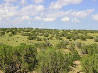38 Acre Northern Arizona Ranch : St. Johns : Apache County : Arizona