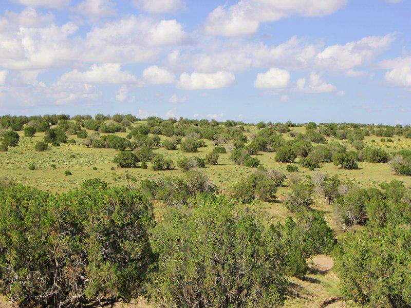 38 Acre Northern Arizona Ranch : Saint Johns : Apache County : Arizona