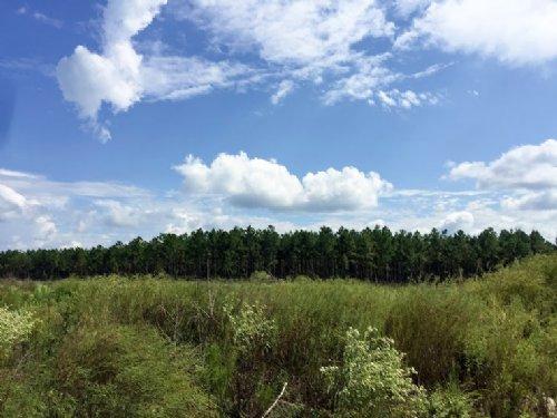531 Acres Fm 787 : Votaw : Hardin County : Texas