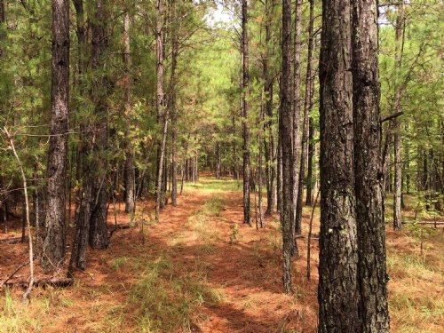 35 Acres : Sturgis : Choctaw County : Mississippi