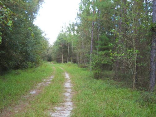 144.95 Acres On Paved Road : Lake City : Columbia County : Florida