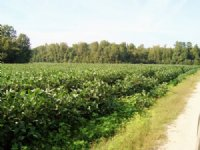 74.74 Acres In Orangeburg : Orangeburg : Orangeburg County : South Carolina