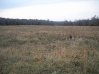 200 Ac +/- Ravenden : Ravenden : Lawrence County : Arkansas
