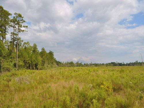 140 Acres Off Fm 1943 : Warren : Tyler County : Texas