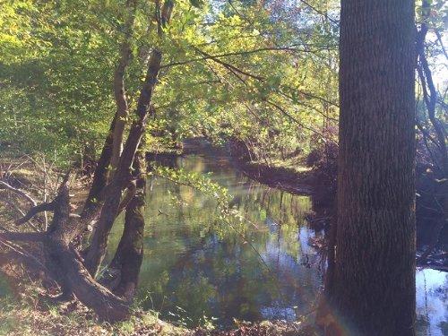 65.31+/- Acres Beautiful Farm Land : Pelham : Marion County : Tennessee