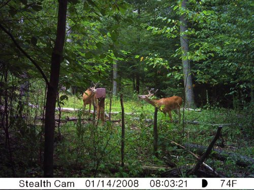 106 +/- Acres And Beautiful 2-story : Danville : Montour County : Pennsylvania