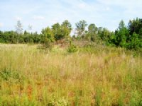 77 +/- Acres In Orangeburg : Orangeburg : Orangeburg County : South Carolina