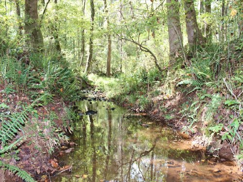 Hardwoods, Fields, Streams And Pond : Forsyth : Monroe County : Georgia