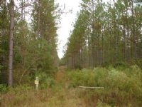 39 Acres On Indian Creek
