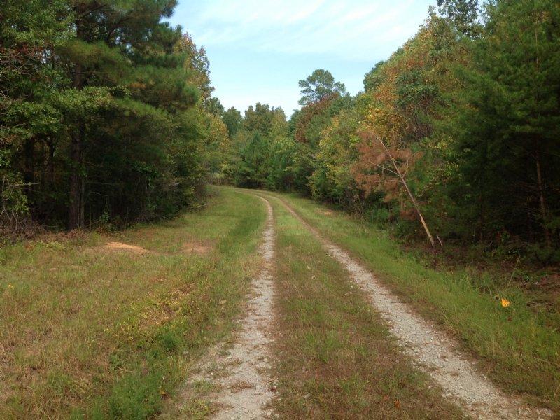 223 Acres Blue Creek Road : Northport : Tuscaloosa County : Alabama