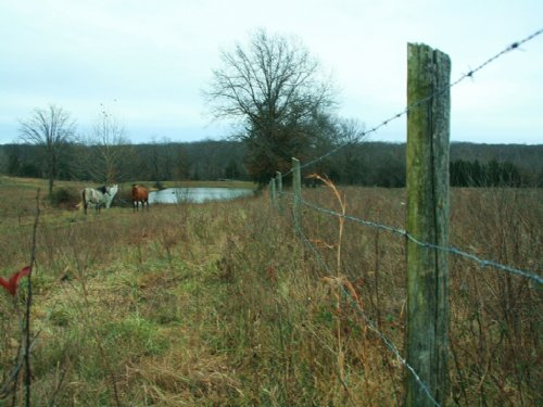 120 Acres Siegel Ave : Cole Camp : Benton County : Missouri