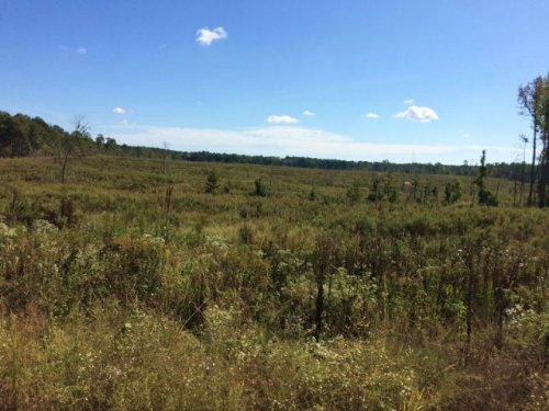 Hunting Land For Sale Choctaw Co, M : McCool : Choctaw County : Mississippi