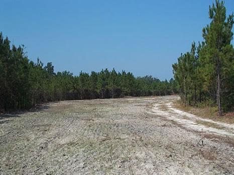 214 Acres : Sparta : Hancock County : Georgia