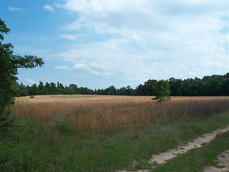284.469 Acre Farm : Sparta : Hancock County : Georgia