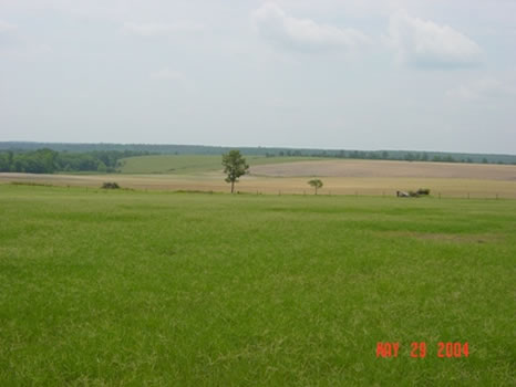 2,439 Acres : Butler : Taylor County : Georgia
