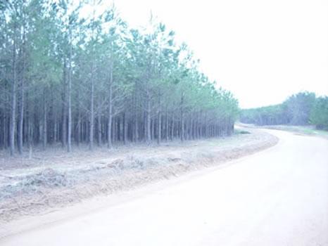 189 Acres : Roberta : Crawford County : Georgia