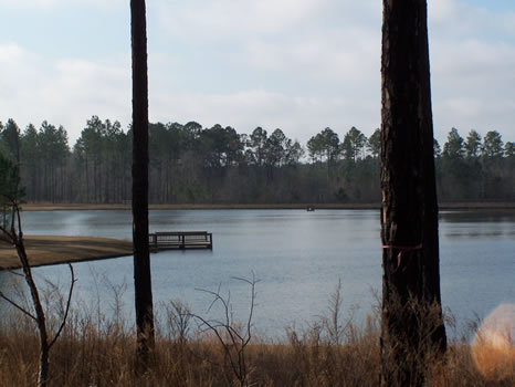 5.05 Acre Lot | Highland Lakes : Eastman : Dodge County : Georgia